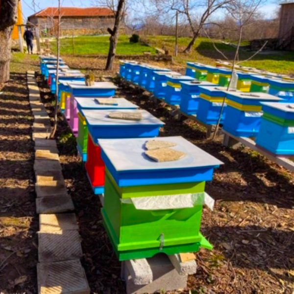Stone & Compass beehives in Stolat, Bulgaria
