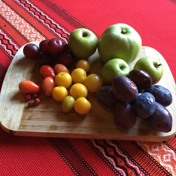 Freshly picked apples, figs, plums, and berries from our center